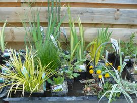 Display of Pond Plants